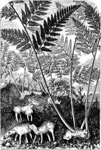 Изображение Cibotium KAULF. в XIX веке