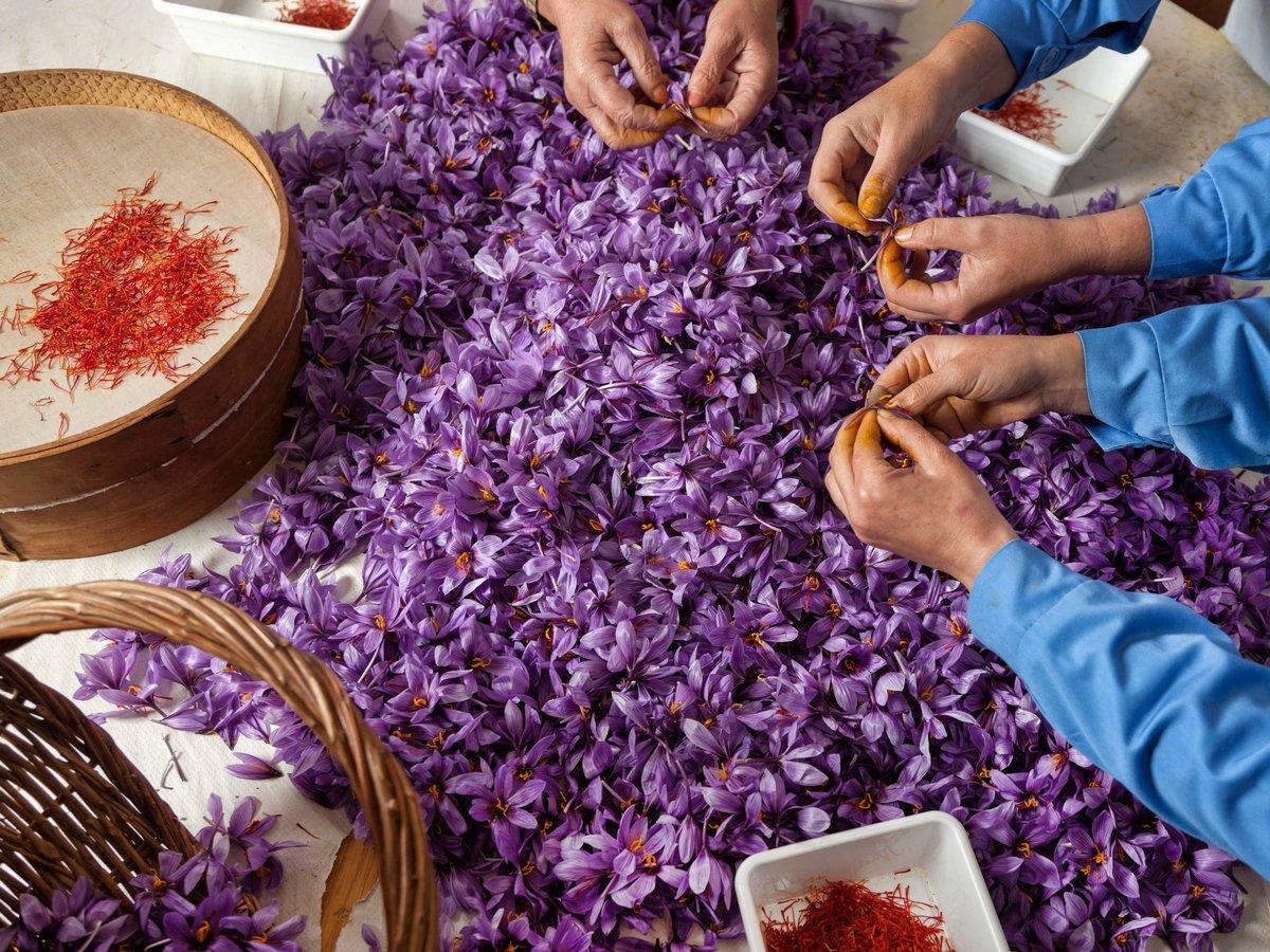 Специи. Ручная обработка цветков шафрана